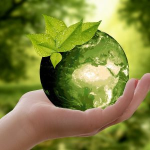 nature, earth, sustainability